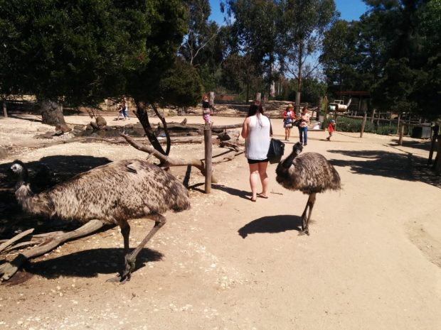 melbourne zoo